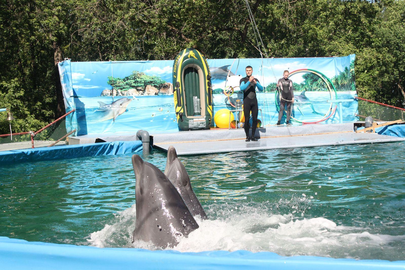 Фотоотчет с открытия дельфинария в Нижнем Новгороде